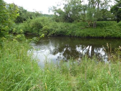 A690 riverside dog walk with doggie swimming beach, County Durham - Driving with Dogs