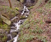 River Wear dog walk near the A1, County Durham - Dog walks in County Durham