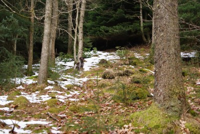 A90 dog walk in the Glen of Drumtochty, Scotland - Driving with Dogs