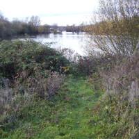 A14 near St Ives dog walk, Cambridgeshire - Dog walks in Cambridgeshire
