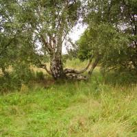A614 rural village dog walk, Nottinghamshire - Dog walks in Nottinghamshire