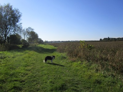 Gentle dog walk and a dog-friendly pub, Kent - Driving with Dogs