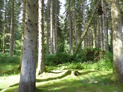 Forest dog walk and nature reserve near Kielder, Northumberland - Driving with Dogs