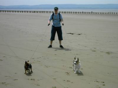 Brean dog-friendly beach, Somerset - Driving with Dogs