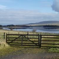 Reservoir dog walk near Balerno, Scotland - Dog walks in Scotland