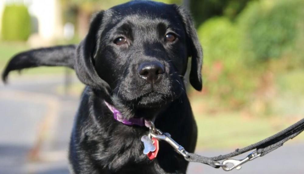 Canine Partners.jpg