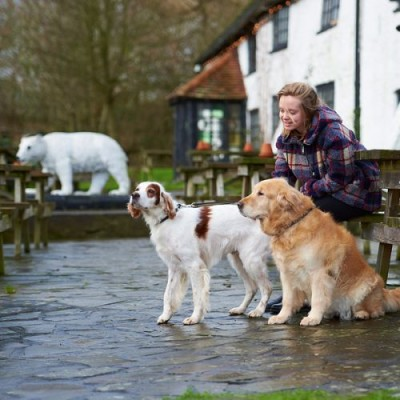 Tanbridge dog walk and dog-friendly inn, Surrey - Driving with Dogs