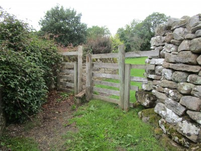 Rural dog-friendly pub and dog walk, North Yorkshire - Driving with Dogs