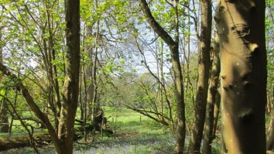 A25 dog walk near Dorking, Surrey - Driving with Dogs