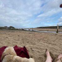 Summerleaze dog-friendly beach, Cornwall - summerleaze2.jpeg