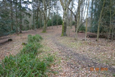 Dog walk and dog friendly pub near the M4, Berkshire - Driving with Dogs