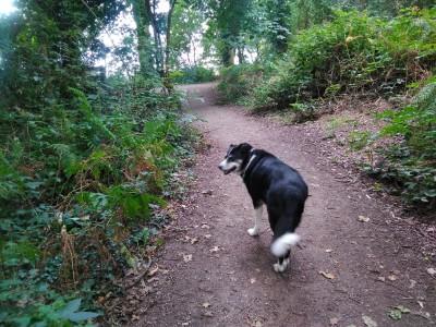 Ruff Wood dog walk near Ormskirk, Lancashire - Driving with Dogs