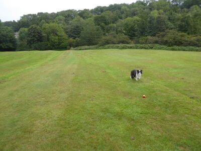 A193 country park dog walk, Northumberland - Driving with Dogs