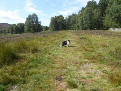 Magical stone and moorland dog walk, Northumberland - Driving with Dogs