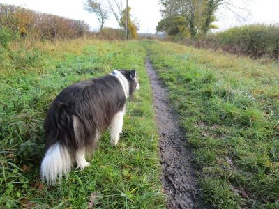 A420 dog walk and pub near Abingdon, Oxfordshire - Driving with Dogs