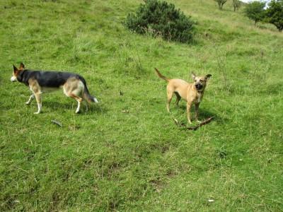 Hulme End dog-friendly pub, B&B and dog walk, Staffordshire - Driving with Dogs