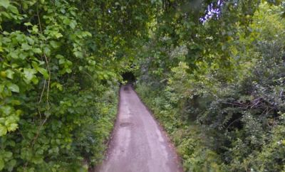 A54 Easy linear dog walk, Cheshire - Driving with Dogs