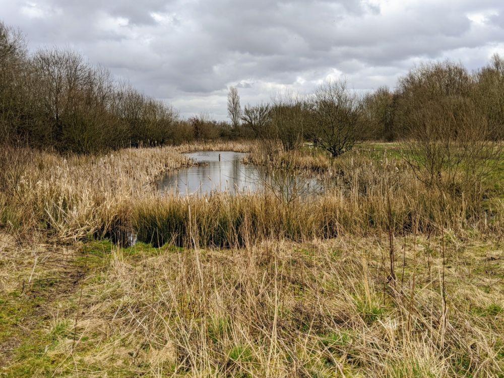 Local Dog Walk: Wheatacre Woods, Lancashire - IMG_20200307_144616.jpg
