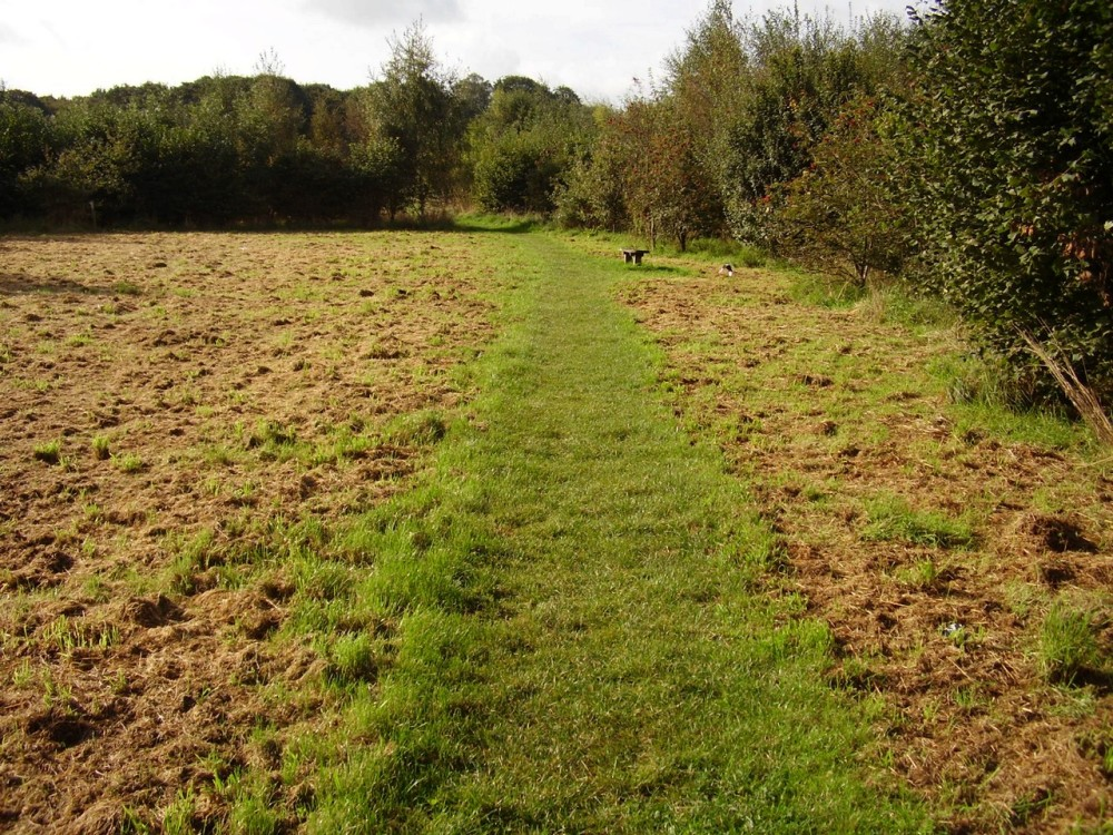 M6 Junction 20 dog walk near Lymm, Cheshire - Dog walks in Cheshire