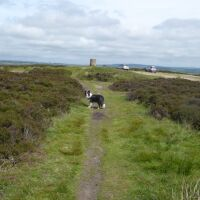 A dog walk on the moors from the Beacon, North Yorkshire - Yorkshire dog walks