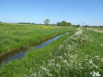 A walk on the Viking Way near Horncastle, Lincolnshire - Driving with Dogs