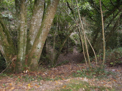 Kings Wood dog walk, Cornwall - Driving with Dogs