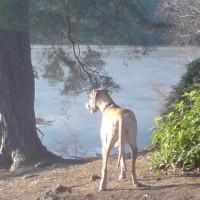 Waggies Dog Walking Service, Berkshire - Image 1