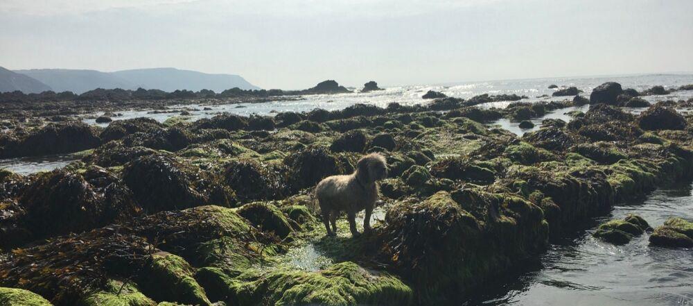 Widemouth dog-friendly beach and dog walk, Cornwall - 3DD1217D-E993-4FA4-AA82-74737718D5D8.jpeg