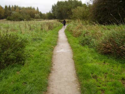 Shevington local dog walk, Lancashire - Driving with Dogs