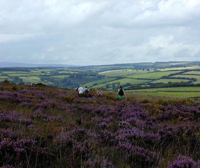 Easy dog walk in the Exmoor National Park, Somerset - Driving with Dogs