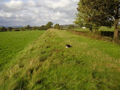 Grimsargh dog walk, Lancashire - Driving with Dogs