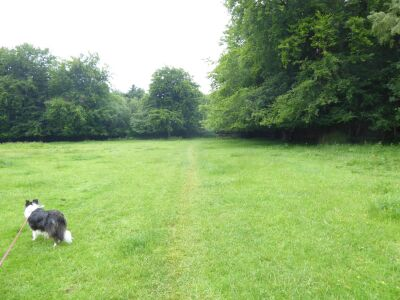 A170 remote woodland walk with the dog near Sawdon, North Yorkshire - Driving with Dogs