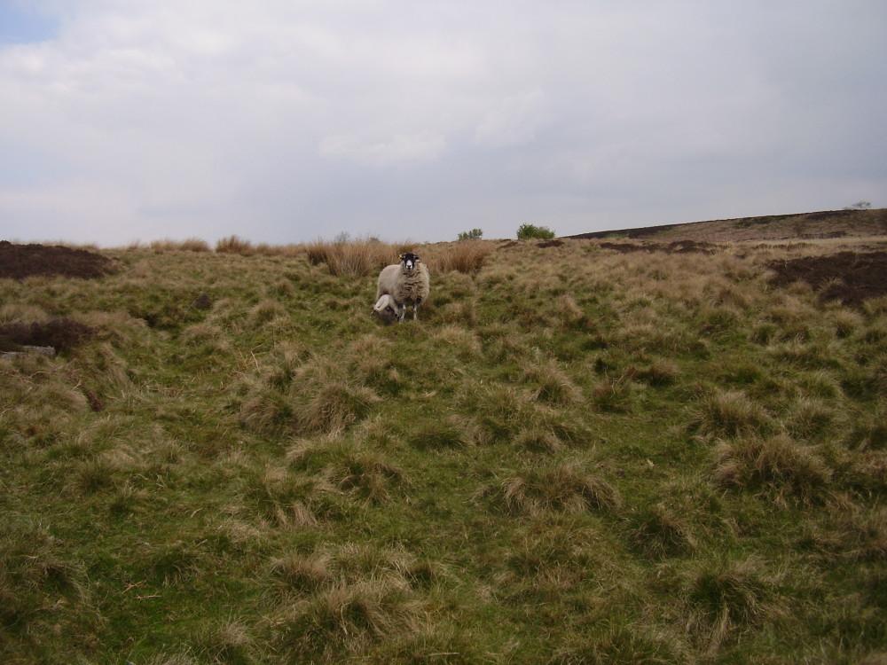 Big Moor dog walk, Derbyshire - Dog walks in Derbyshire