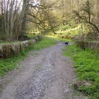 Youlgreave dog walk and dog-friendly pub, Derbyshire - Dog walks in Derbyshire