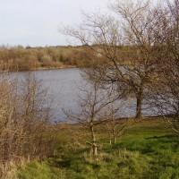 Sandwell Valley dog walk, West Midlands