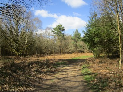 A248 Forest dog walk and a Roman temple, Surrey - Driving with Dogs