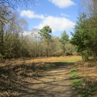 A248 Forest dog walk and a Roman temple, Surrey - Surrey dog-friendly pub with dog walk.JPG