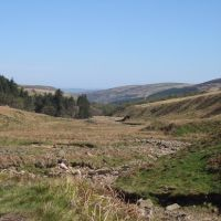 A697 Dog walks in the hills, Northumberland - Northumberland dog walking places.jpg