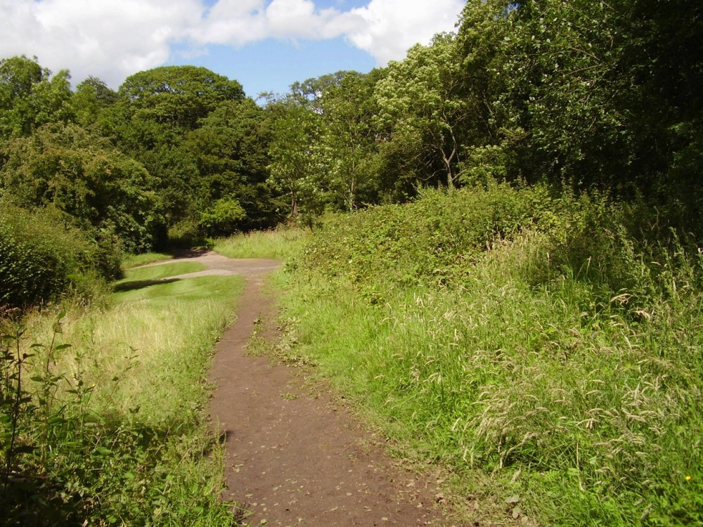 Pipers Hill Woods dog walk, Worcestershire - Dog walks in Worcestershire