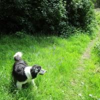 A382 Waterside dog walk, Devon - Devon dog walking places.JPG