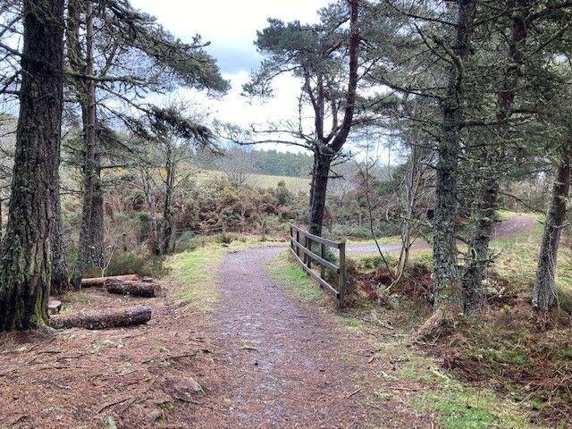 Tain Hill dog walk, Scotland - Tain 1.jpg