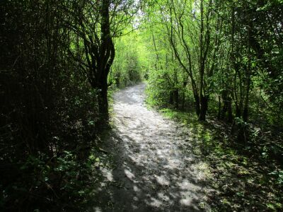 Melton Riverside picnic spot and short dog walk, Suffolk - Driving with Dogs