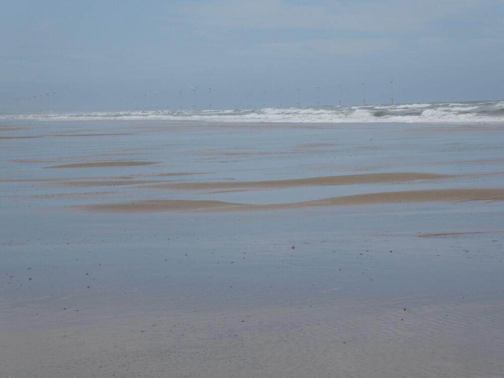 Marske Sands dog-friendly beach, Yorkshire - Yorkshire dog-friendly beaches and dog walks