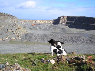 A55 dog-friendly beach near Conwy, Wales - Driving with Dogs