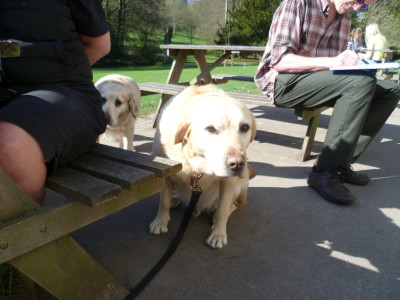 Dover dog walk and cafe, Kent - Driving with Dogs