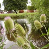 Stratford-upon-Avon Doggie Lido, Warwickshire - Dog walks in Warwickshire