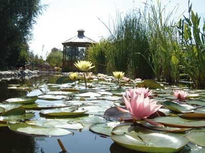 Water gardens of Moulin des Vernes - dog-friendly, France - Driving with Dogs