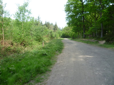 A456 Forest dog walks, cafe and doggie shower, Worcestershire - Driving with Dogs