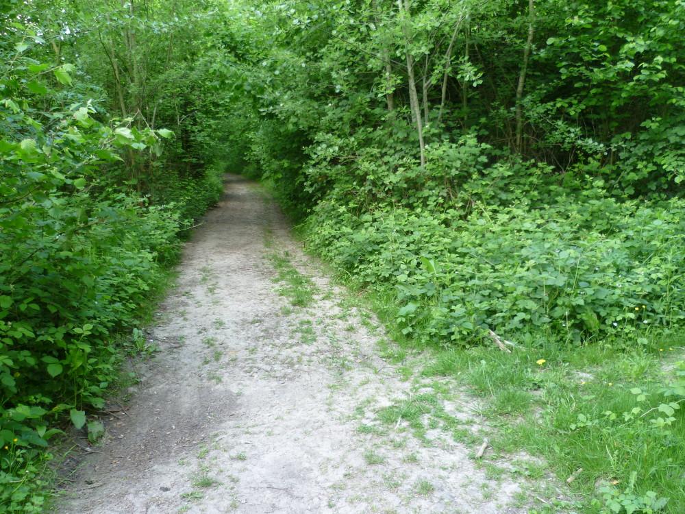 A26 exit 8 dog walk in Bourlon, France - Image 2