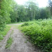 A26 exit 8 dog walk in Bourlon, France - Image 4